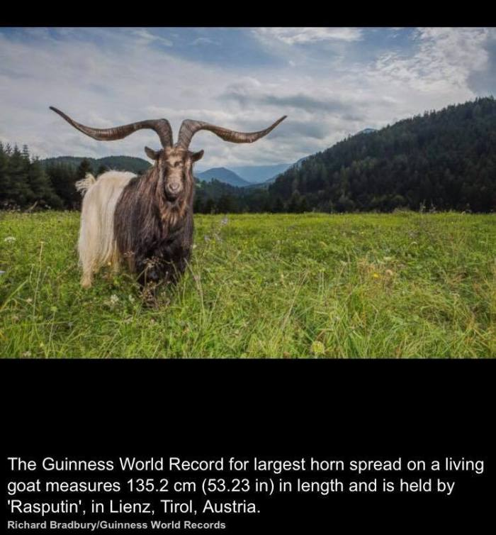 Guinness_book_of_records_1